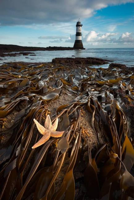 Penmon lighthouse with starfish