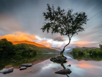 Sunrise over the lone tree at Llyn Padarn