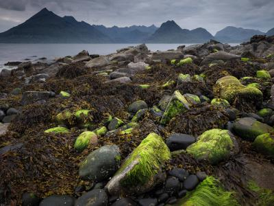 Seaweed on the rocks at Elgol, Isle of Skye